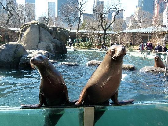 central-park-zoo-nova-york